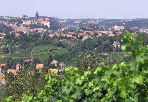 Entlang des Sächsischen Weinwanderweges, Foto Sächsisches Elbland